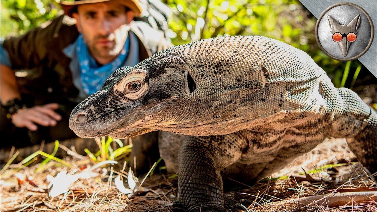Face to Face with a Komodo Dragon! - in VR180!