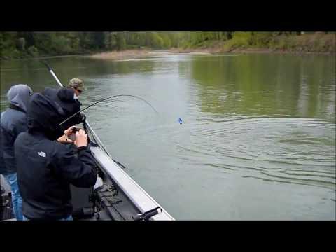 willamette river springers april 2011 with guide Ian Premo