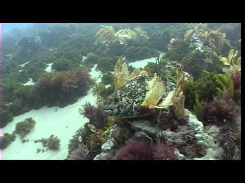 Popes Eye - Port Phillip Heads Marine National Park
