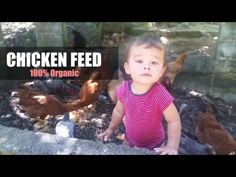 Chicken Feed 100% Organic and CHEAP!