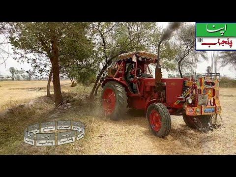 Belarus 510 Power show against a Tree Tochan