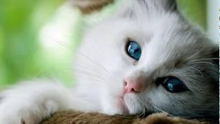 🌼Почему кот ходит в туалет где попало?🌼Кот перестал ходить в лоток🌼