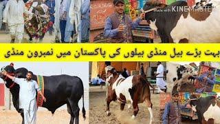 Download Khubsurat Baal Videos - Dcyoutube