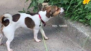 как выгулять собаку?🤔