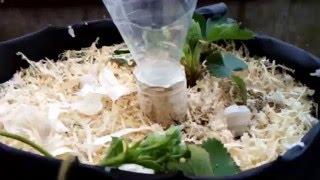 Супер мини огород. Клубника в трубах. Видео 6(https://youtu.be/_N_R4Eub5fY как сделать трубы для клубники., 2016-04-20T19:03:42.000Z)
