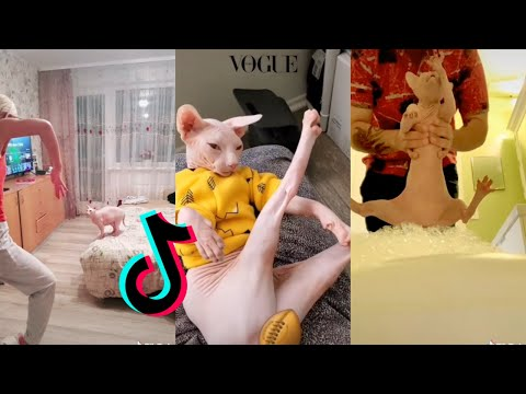 Funny Sphynx Cat [HAIRLESS CAT TIKTOK COMPILATION] ~Part 2