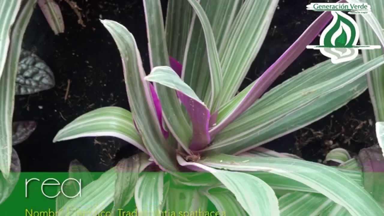 plantas para jardines verticales paleta vegetal youtube