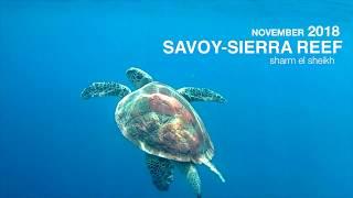 Red Sea Turtle at the Savoy Sierra Reef (November 2018)