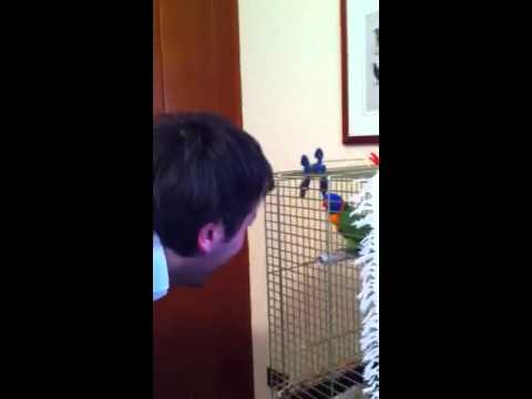 the parrot crazy, funny and stupid