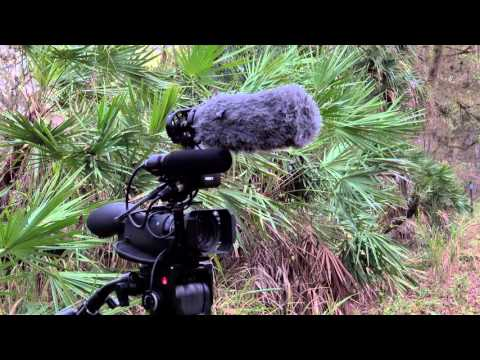Wildlife Filmmaking 1