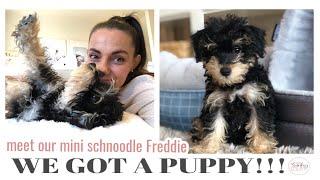 WE GOT A PUPPY!!! Freddie the Mini Schnoodle  Puppy Tips & Essentials || THE SUNDAY STYLIST