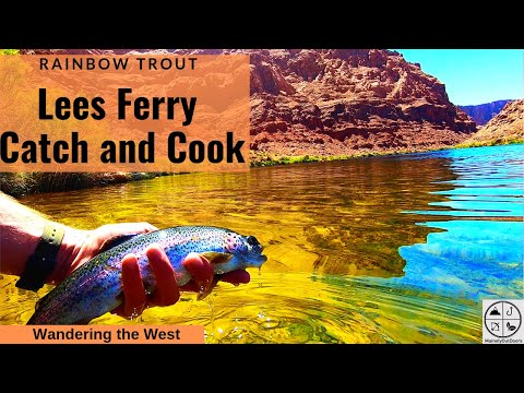 Fly Fishing Lees Ferry For Rainbow Trout (Catch, Cook, And Camp)