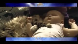 Спящая Самые популярные ролики про смешных животных,