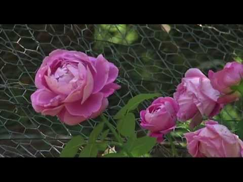 Ann Foster's Private Garden