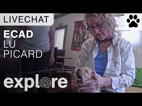 ECAD with Lu Picard - Live Chat - 동영상