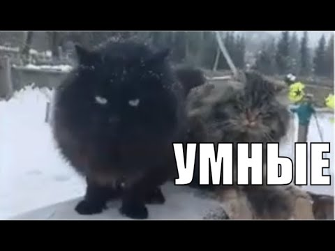 Пушинка и Чернуха деревенские кошки умные животные ❤️ Village cats smart animals