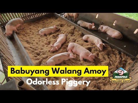 Download Feedpro - BABUYANG WALANG AMOY TECHNOLOGY (2020)