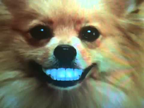 doggy denture commercial youtube