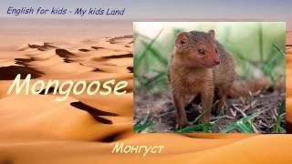 Дикие животные Африки. Животные в пустыне. Часть 1. Английский язык для детей.