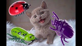 British Shorthair Kittens vs  Bugs