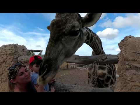 Bailie And Bobby Elche Zoo Alicante Gopro6