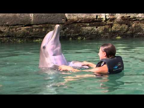 Bermuda Dolphin Experience