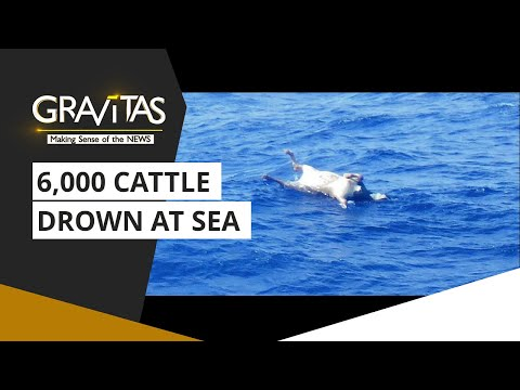 Gravitas: Cattle Ship Capsizes Off Japan Coast
