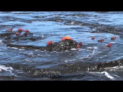 Venture visits Galapagos