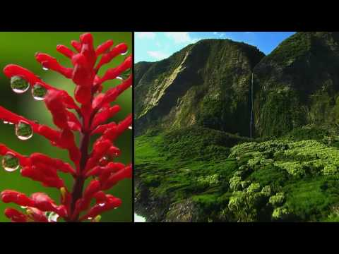 hawaii-tourism-authority
