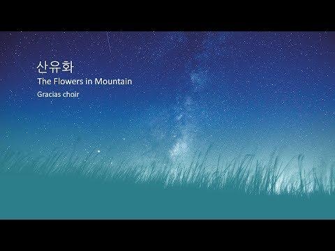 Wild Flower on the Mountain