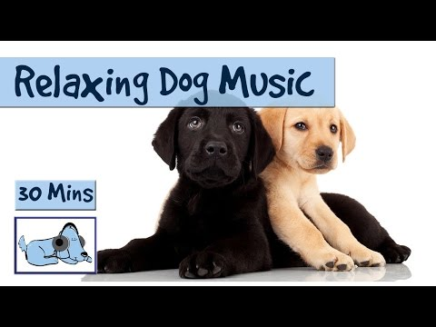 Relaxing Dog Music for Your Dog - Perfect for Nervous Retrievers or Labs. 🐶 #RETLAB01