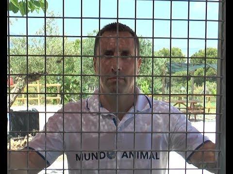 Doce días de encierro voluntario contra el maltrato animal