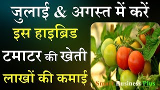 July &  August में करें टमाटर की खेती | Tomato July farming | tamatar ki kheti | Smart Business Plus