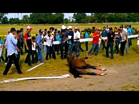 Thumbnail: TERRIBLE ACCIDENTE EN CARRERAS DE CABALLOS