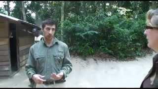 Mondika Camp, Gorilla Safari, Republic of Congo