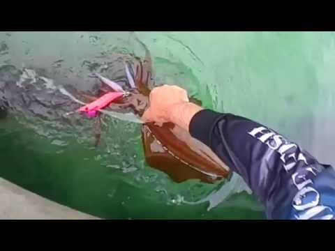 How To Go Squid Fishing Jervis Bay