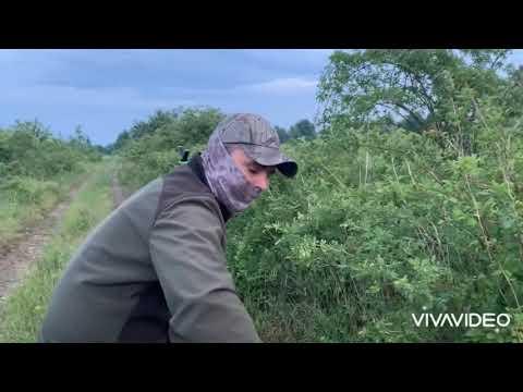 RoeBuck Hunting  In România - June 2020