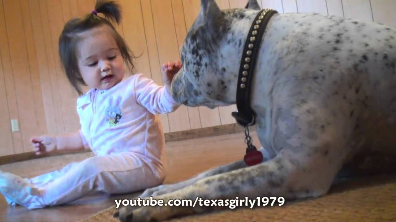 Baby Greifen Pit Bull Sharky Attacks Baby Girl With Kisses!!! Pitbull