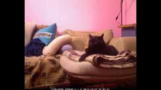 Невероятные приключения кота 2