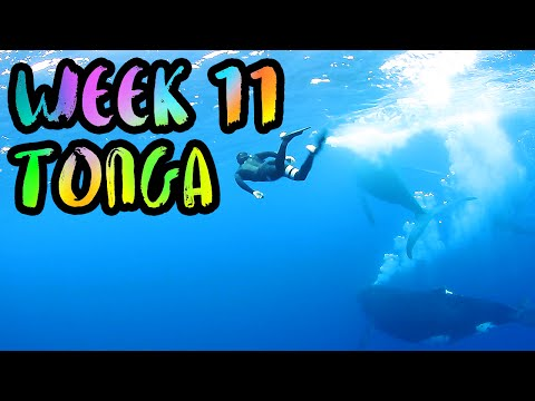 Swimming with Humpback Whales in Tonga!! BEST MOMENT EVER!! /// WEEK 11 : Vava'u, Tonga