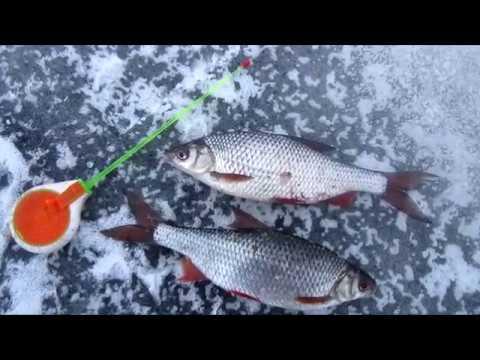 Ловля плотвы в заливах зимой