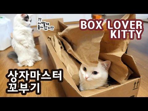 상자마스터 꼬부기: 상자면 다 들어간다! BOX LOVER CAT: CAN GET IN ANY BOX!