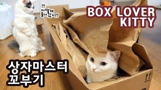 상자마스터 꼬부기 상자면 다 들어간다 box lover cat can get in any box