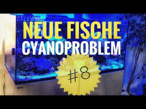 neue-fische-und-cyanoproblem- -reefer-update-#8- -meerwasser-aquarium- 