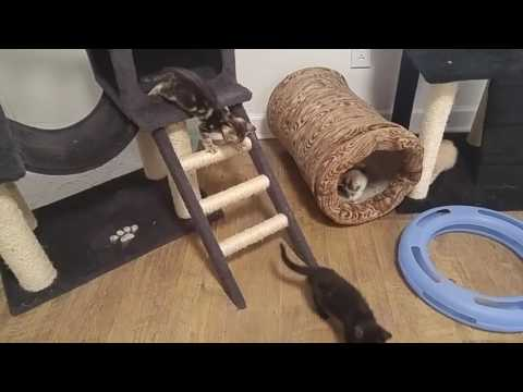 Mia's kittens (plus one) playing