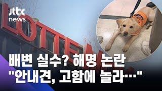"""안내견,  배변 실수? 롯데마트 해명도 논란…""""…"""