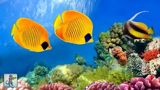 Coral Reef Aquarium Collection  「24/7」 🔴 Relaxing Music For Sleep, Study, Yoga & Meditation