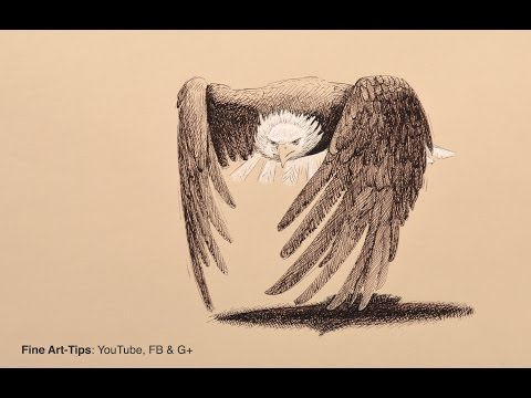 How to Draw a Bald Eagle With Fountain Pen