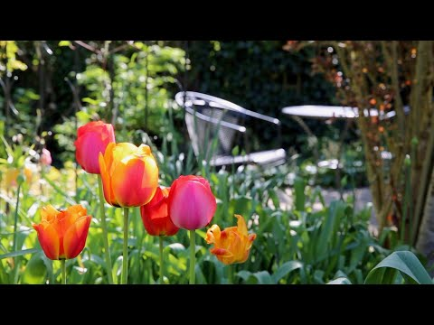 National Garden Scheme – Gardening & Health (Long Crendon)