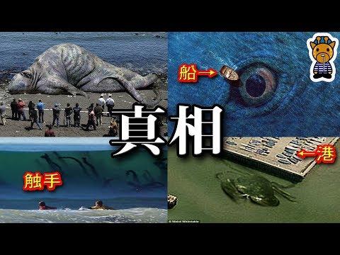 超巨大海洋生物たちの真相